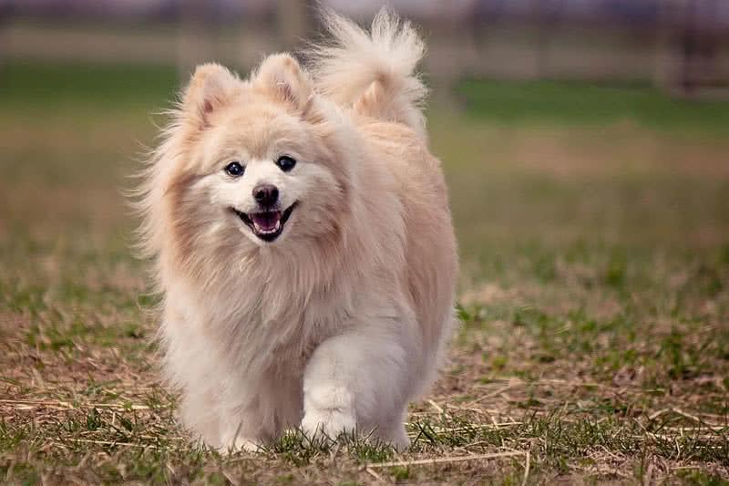 اجمل كلاب العالم - صور كلاب