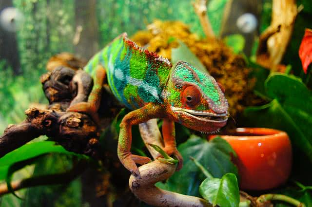 7 Amazing Color changing Animals In The World hemy ster ious world