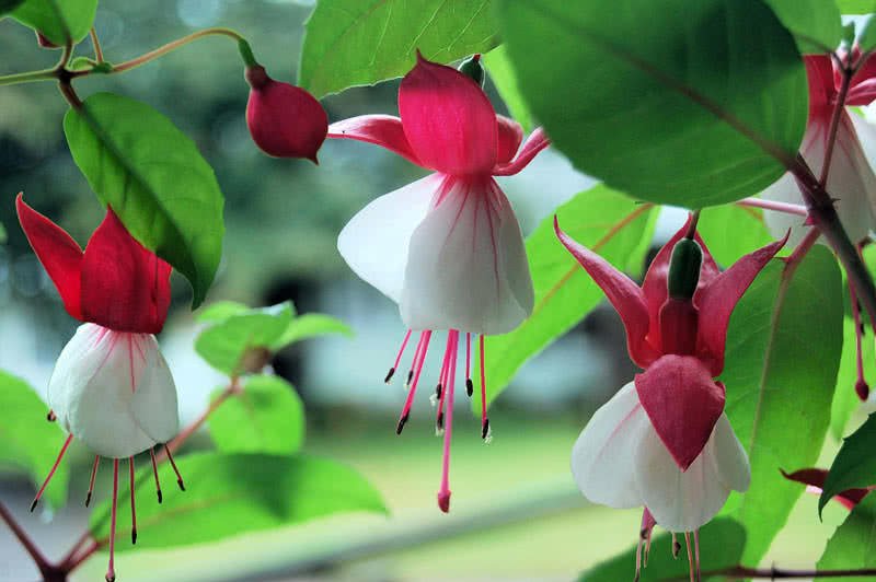 Top 9 Most Beautiful Flowers For Hanging Baskets - The