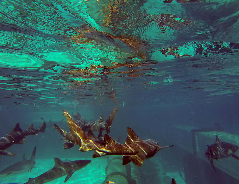 top 5 must see underwater places in the world the mysterious world