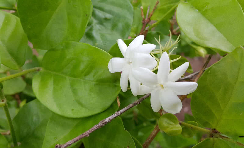 Top 10 most pleasant smelling flowers the mysterious world jasmine flower is one of the most popular pleasant smelling flowers in the world this beautiful small flower is native to tropical regions around the mightylinksfo