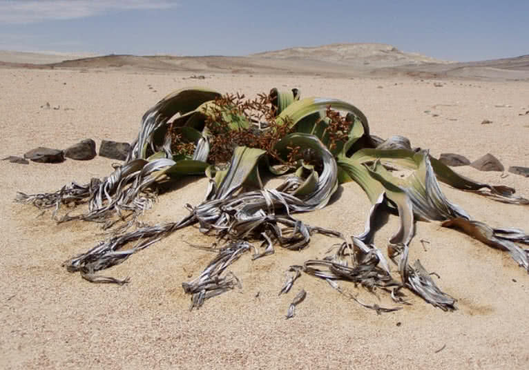 mysterious desert plants