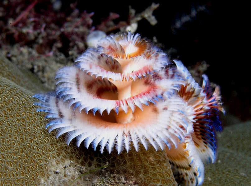 Top 10 Most Incredibly Colorful Ocean Creatures - The