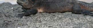animals of galapagos