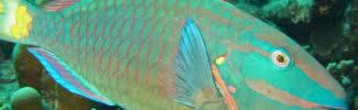 incredibly colorful ocean creatures