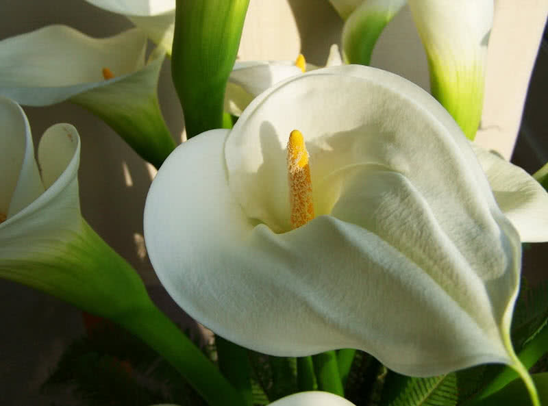 Top 10 best wedding flowers in the world the mysterious world the large calla lily flower is a traditional wedding flower native to africa the trumpet shaped comes in pink yellow purple and orange colors mightylinksfo