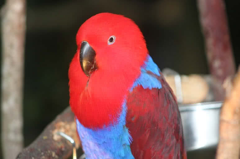 Top 10 Most Beautiful Parrots In The World - The Mysterious World