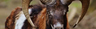 animals with amazing horns