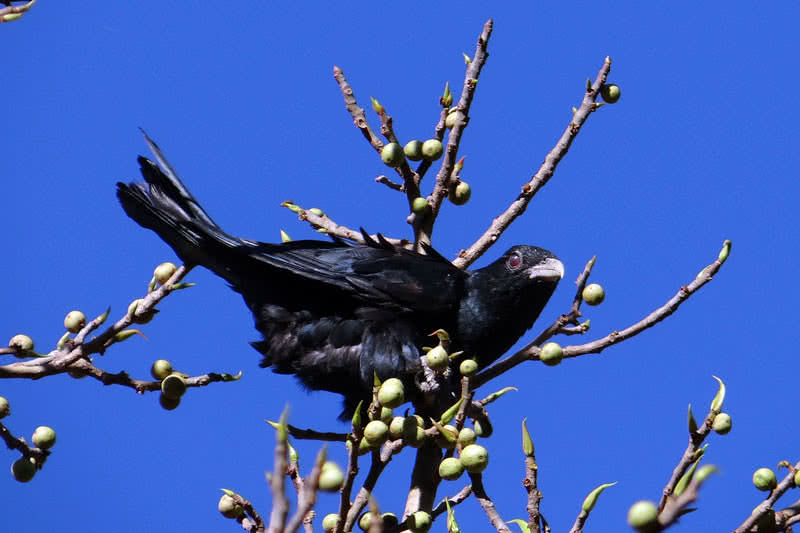 Top 10 Best Singing Birds In The World - The Mysterious World