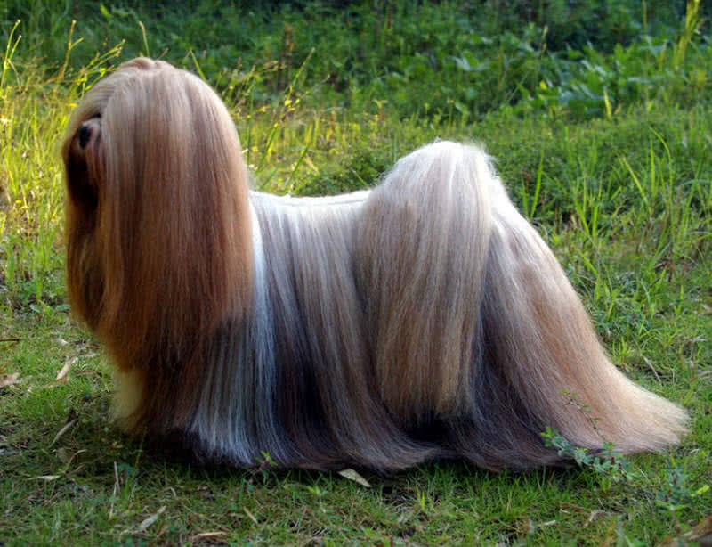 animals with beautiful hair