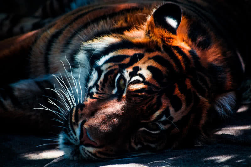 Top 10 Strongest Animals In The World - The Mysterious World