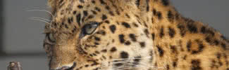 animals likely to disappear in near future