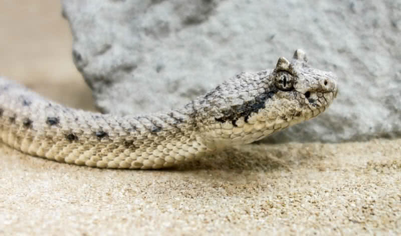amazingly adaptive Sahara desert animals