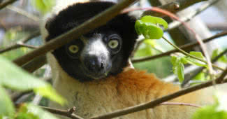 Amazing Animals Found Only In Madagascar