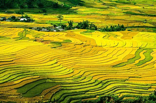 rice teracess
