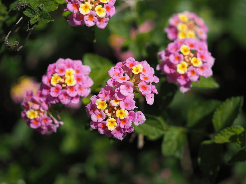 Small Hanging Basket Flowers: Top 9 Most Beautiful Flowers For Hanging Baskets