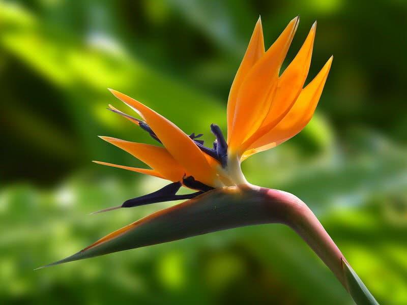 Top 10 most beautiful flowers in the world the mysterious world bird of paradise flower mightylinksfo