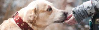 foods you should never feed your dog