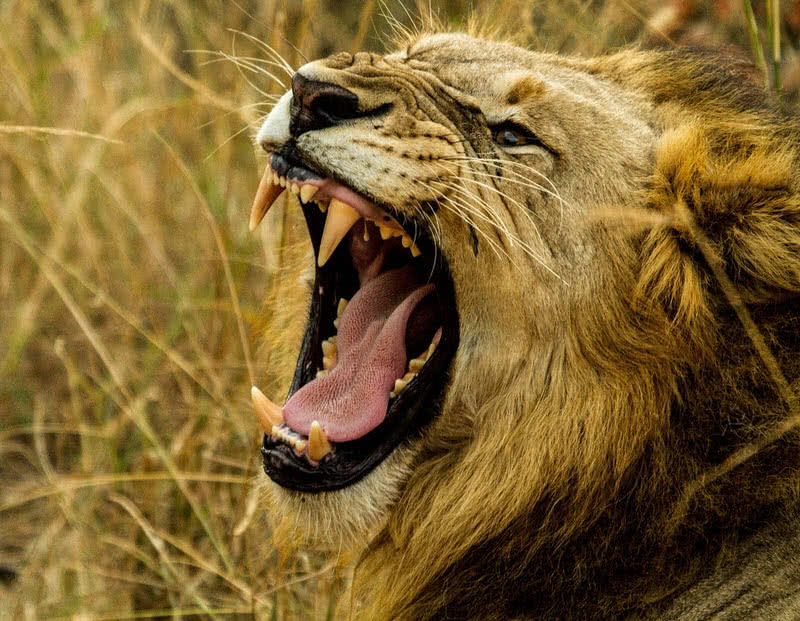 Top 10 Most Powerful Animal Bites - The Mysterious World