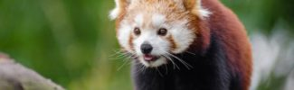 most beautiful endangered animals