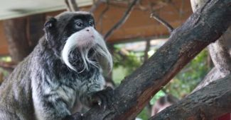most beautiful beards in animal kingdom
