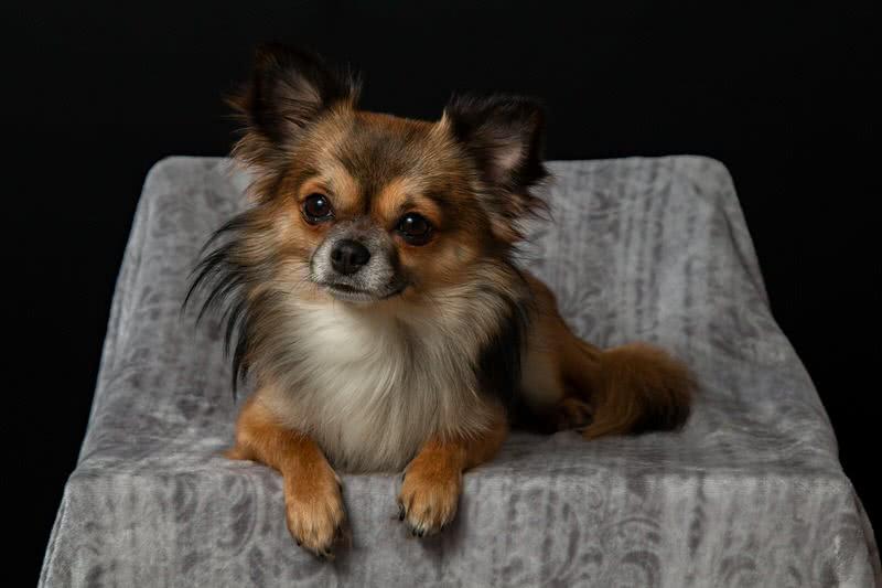 Dog Breeds For Apartment Living