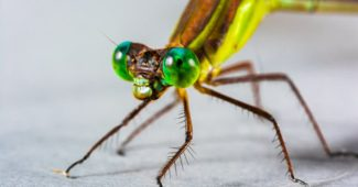 Top 10 Most Amazing Eyes In The Animal Kingdom