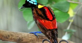birds with amazing tails