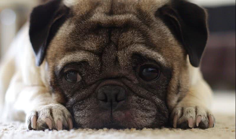 Top 10 Friendliest Dog Breeds The