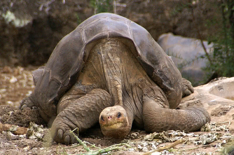 10 animals that have gone extinct in the past decade the