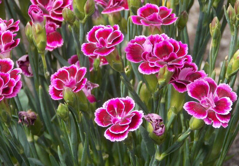 Top 10 Beautiful Flowers In The United States The Mysterious World
